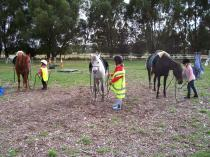 Take time out with The Horse - Christmas and New Year School holiday programmes Lincoln (7608) Horse Riding Classes & Lessons 3 _small