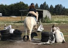Advance into Autumn with The Horse as your guide Lincoln (7608) Horse Riding Classes & Lessons _small