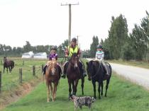 Advance into Autumn with The Horse as your guide Lincoln (7608) Horse Riding Classes & Lessons 3 _small